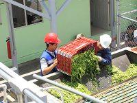 Planta de valorización de residuos orgánicos en Milpa Alta, la primera en la CDMX