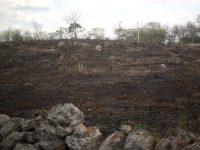 México y el BID invertirán 13.7 mdd para mitigar efectos del cambio climático