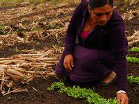 Mujeres campesinas, cosechando desarrollo