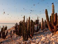 Mexico podría perder 4.3% de su Zona Económica Exclusiva por Cambio Climático