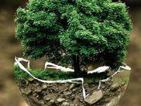 Paradiplomacia local y gobernanza ambiental global: ¿Dos términos que pueden dialogar?