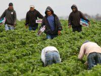 Denuncia CNDH falta de compromiso de autoridades para detectar trabajo forzoso