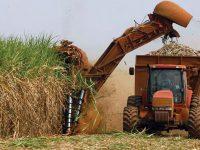 COFECE investiga posibles prácticas en industria del azucar
