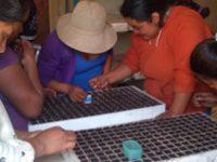Agrotecnología contra la pobreza rural