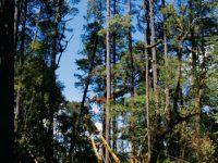 Avanza recuperación de bosques