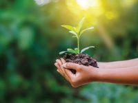 Cómo alcanzar la sostenibilidad desde lo local