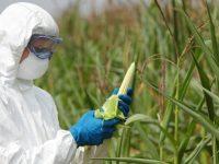 México entre los países con manejo responsable de biotecnología agrícola